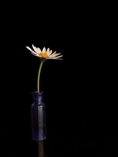 243652-12-still-life-with-white-daisy