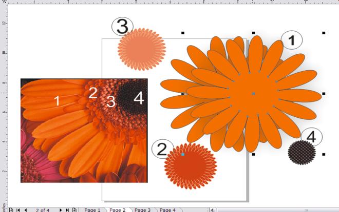 unarranged orange daisy - advanced